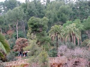 Пальмовая роща в парке Гуэль